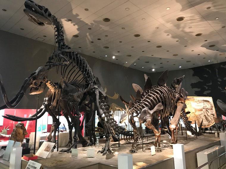 恐竜 博物館 関西
