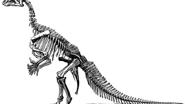 イグアノドンの化石