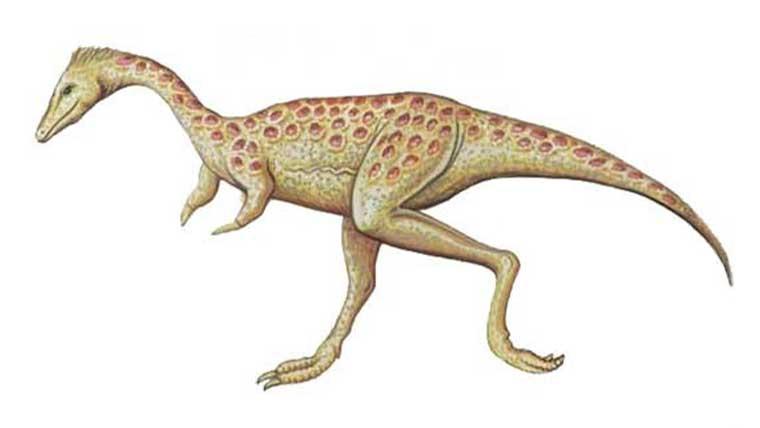 一番小さい最小の恐竜ランキングTOP10!1番小さい肉食恐竜なども紹介